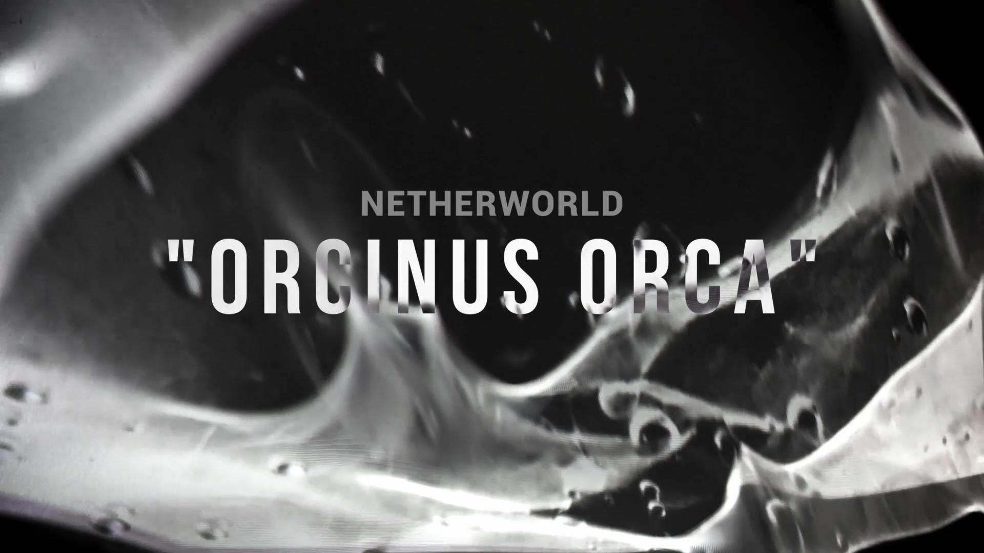 Naslovna. Orcinus orca_w-titles.00_00_05_10.Still023